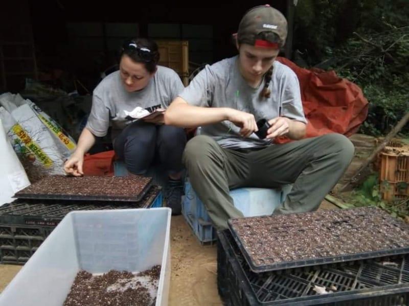 on fait des semis wwoofing chiba