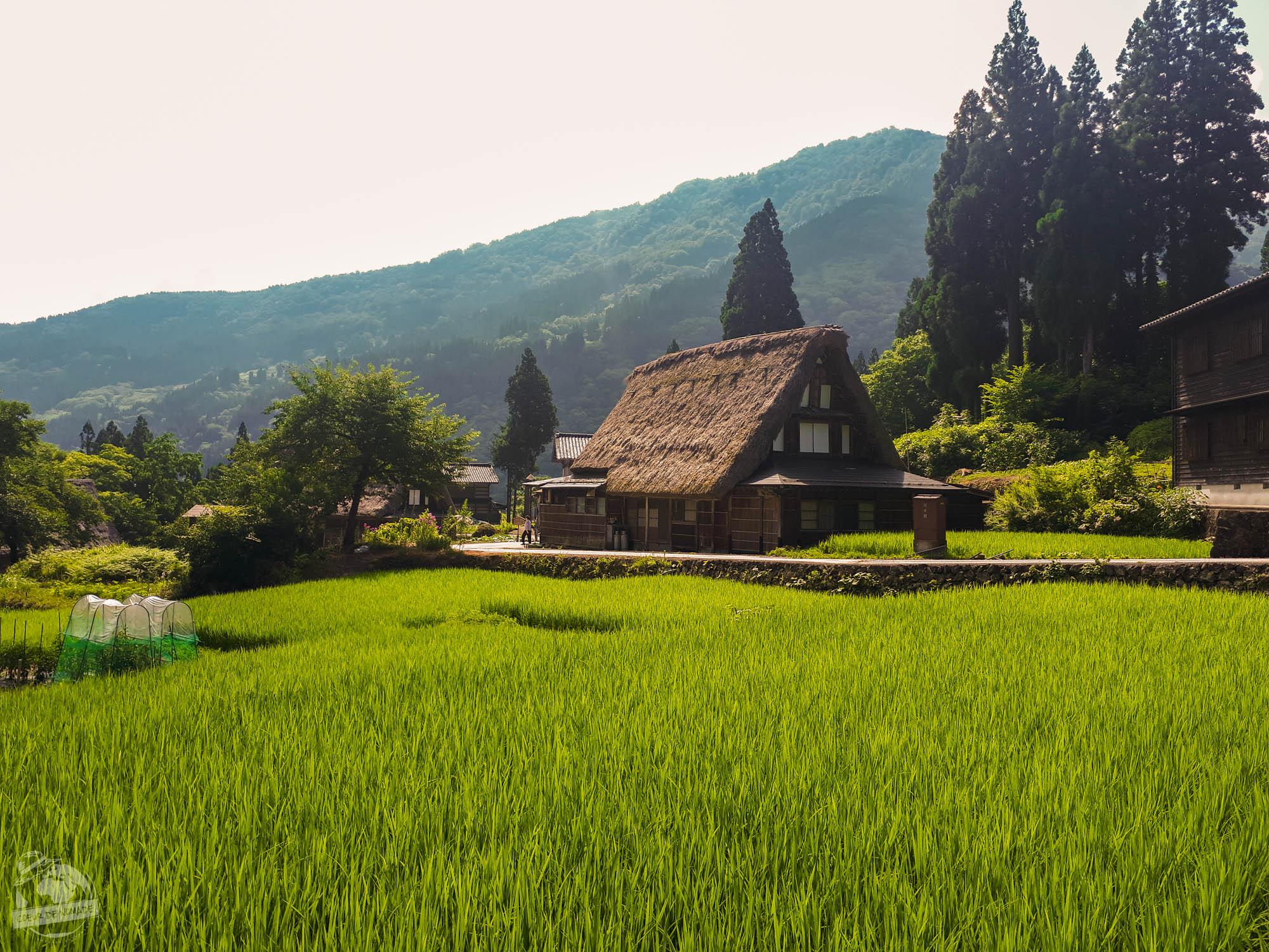 Maison-toit-de-chaume-dans-village-Gassho
