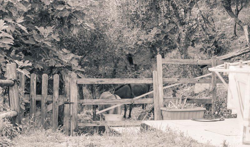 ânes à la Spezia