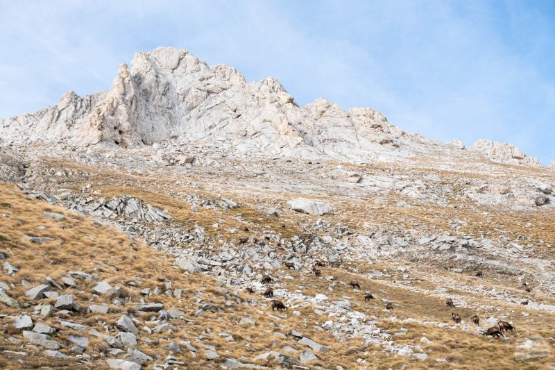 Mont Vihren