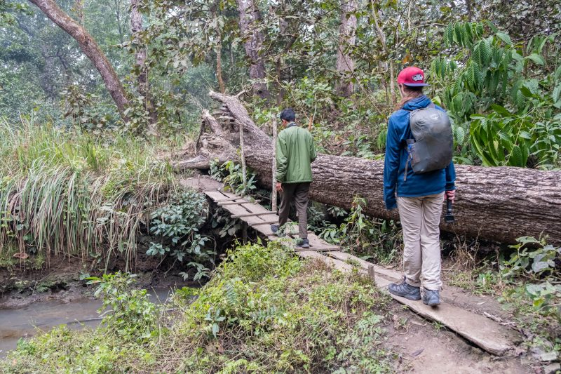 Jungle walking tour Chitwan