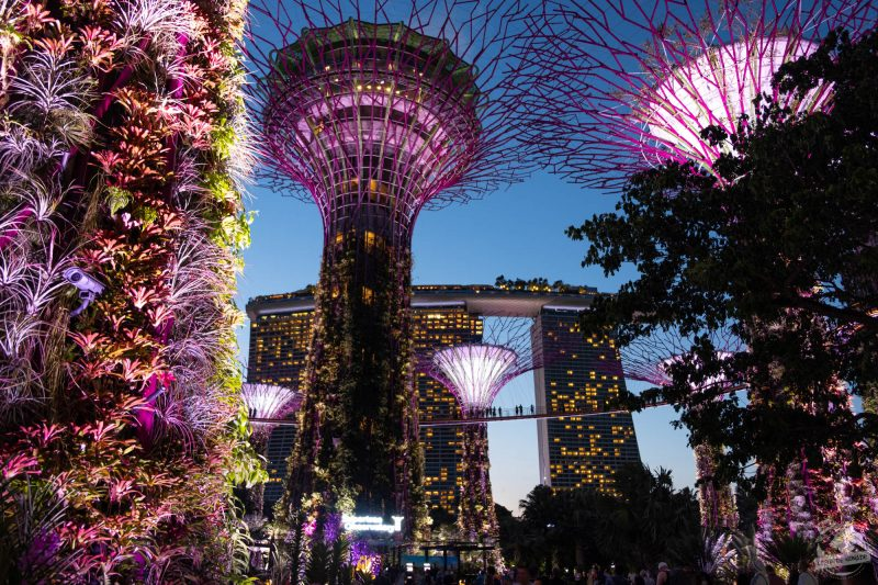 Garden by the bay - Singapour